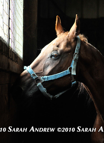 Looking for a Home | by Rock and Racehorses