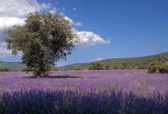 Sous l'arbre - Lardiers (Alpes-de-Haute-Provence)