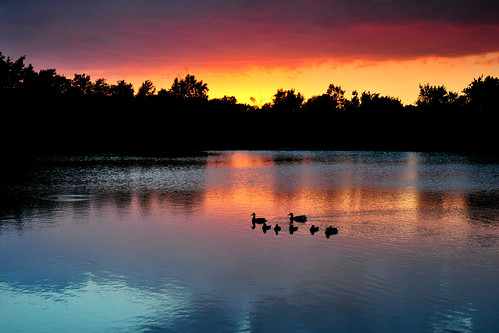 park family sunset water creek reflections duck ducklings kansas mallard wichita chisholm chisholmcreekpark peregrino27newvision