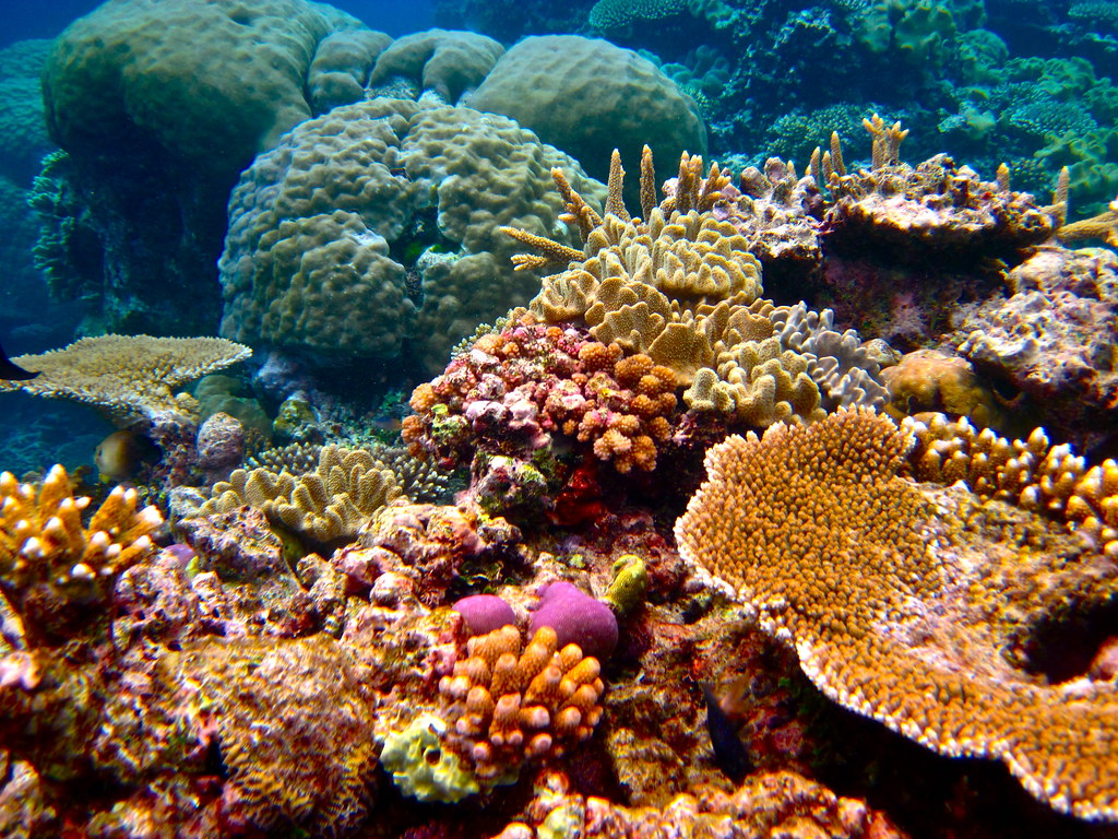 Coral reefs at cairns