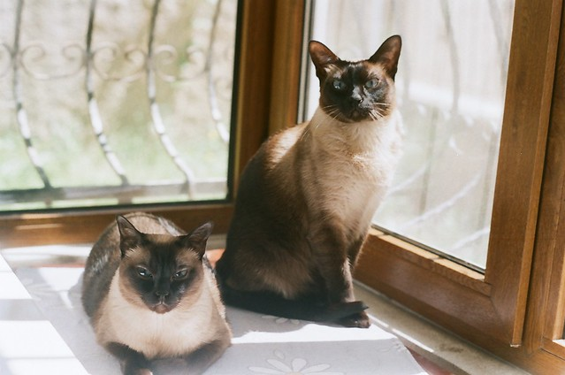 Fadim's cats-Mom & Son