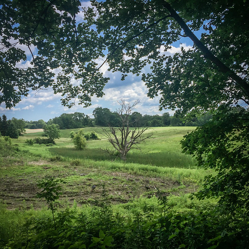 secondlook trees landscape iphone6 pittsford clouds newyork unitedstates us