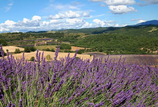 Variations - Puimichel (Alpes-de-Haute-Provence)