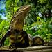 In search of the Pura Vida (Pacific and Central Costa Rica)