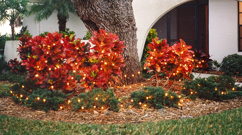 Sarasota - Christmas Lights on Crotons (1995)