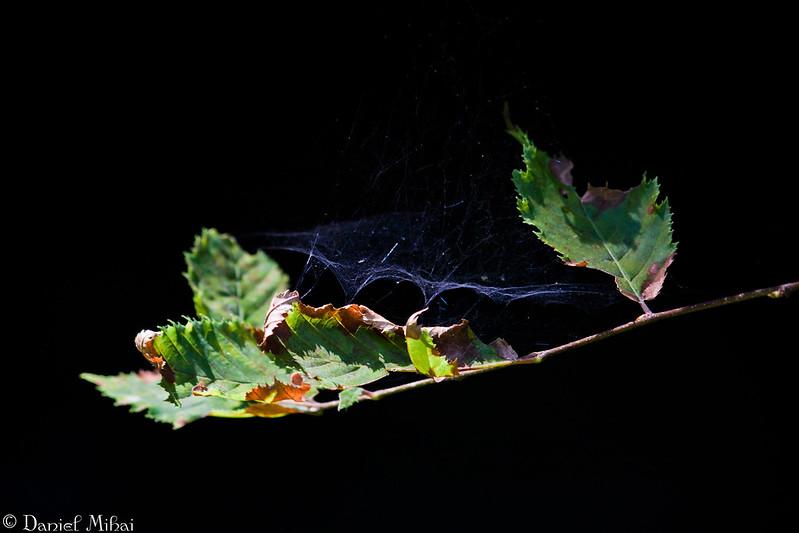 Deadly trap by Daniel Mihai