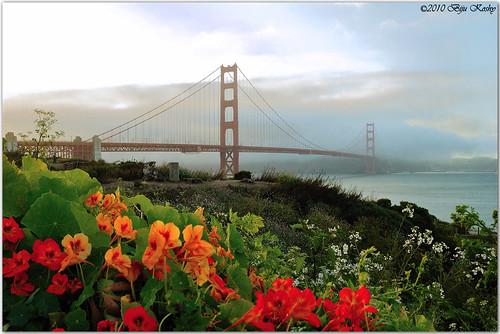 sf sanfrancisco bridge flowers red orange mist yellow misty fog goldengatebridge nasturtiums scenicview