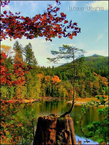 autumn lake canada color fall water landscape bc britishcolumbia autumncolors hdr arianwen haywardlake