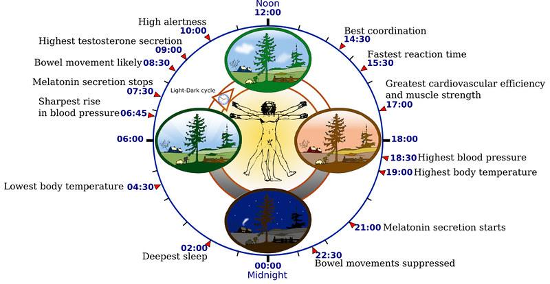 Circadian Rhythm - Human Biological Clock