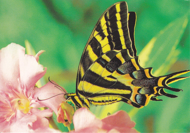 Butterfly On Flower Postcrad