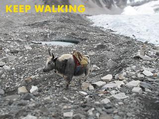 KeepWalking | by & kathleen