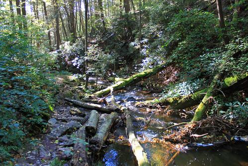 nature newjersey hiking wildlife nj stokes appalachiantrail sunrisemountain sussexcounty stokesstateforest tillmanravine stokesforest sunrisemt