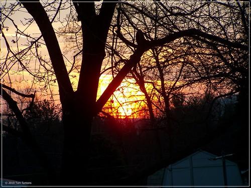 autumn trees sunset eveninglight