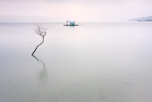 sunrise taiwan 南投 台灣 日月潭 sunmoonlake nantou 日出 枯木 魚池 出水口 samyaoo