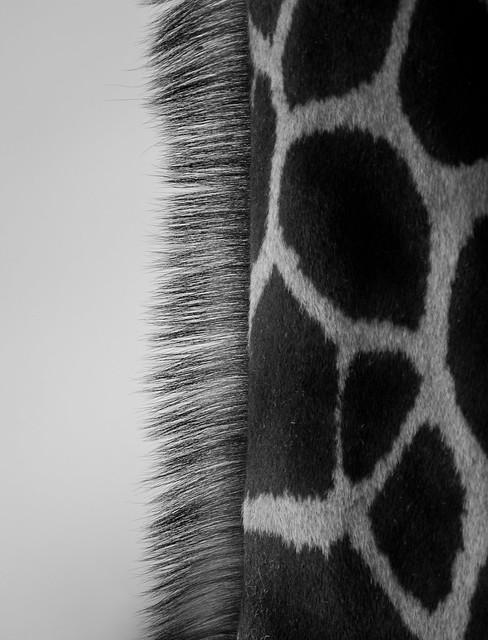 Giraffe Neck
