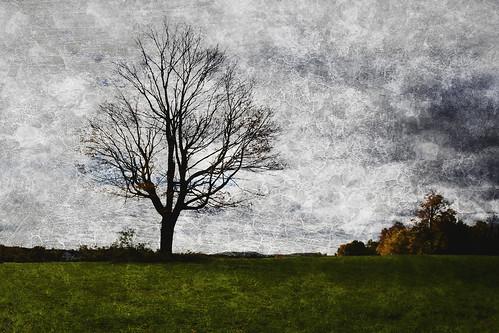 morning tree fall texture field october durham cloudy connecticut ct barren middlefield giantonio kgiantonio kengiantonio