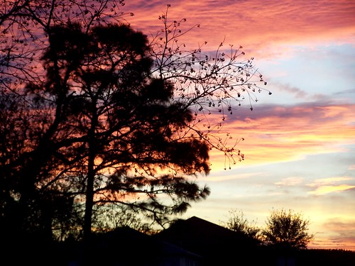 sky tree clouds sunrise