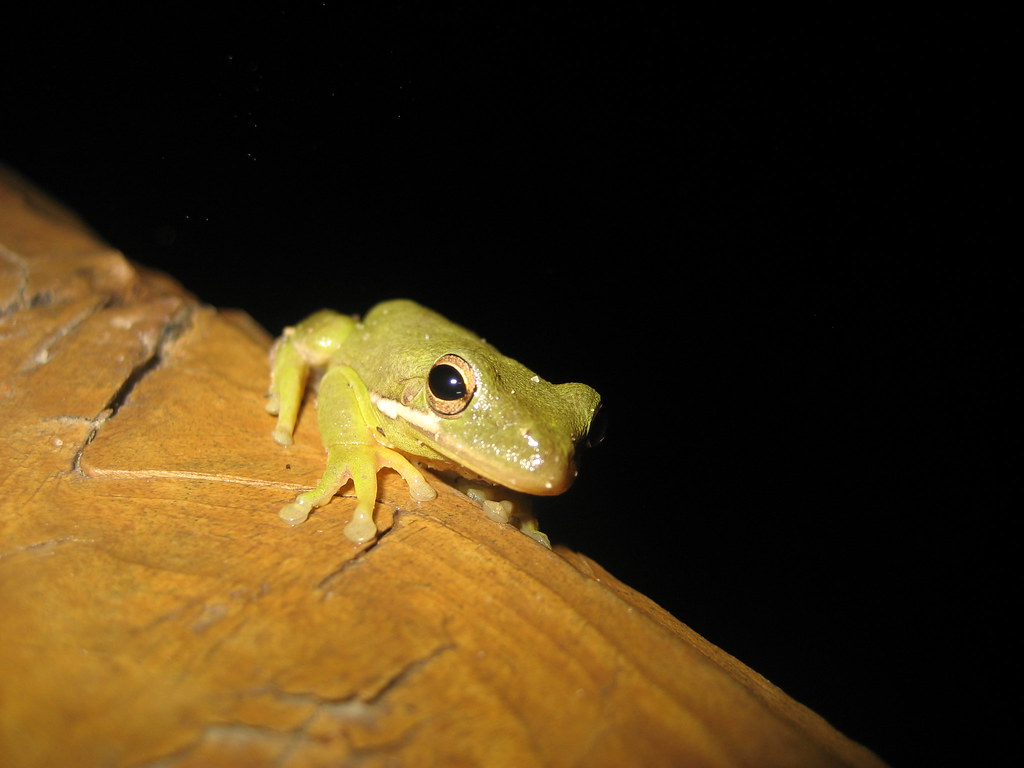 hot tub frog