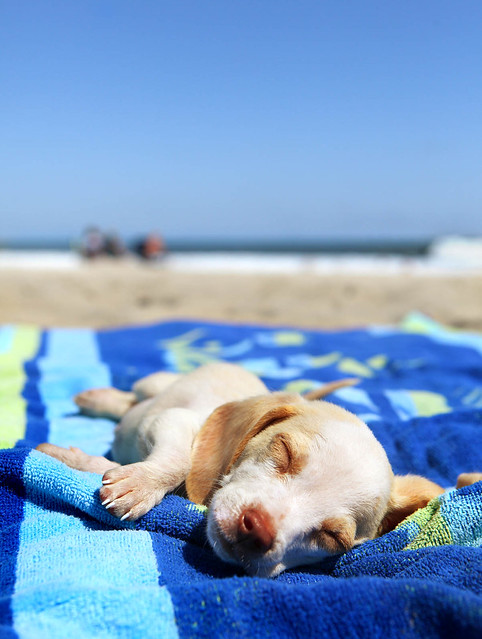 beaches are exhausting