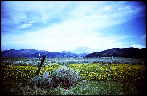 park camera trip travel flowers blue camping summer vacation sky holiday mountains west film june forest 35mm fence geotagged island big lomo lca xpro lomography crossprocessed xprocess wire montana crossprocess rocky ct brush sage idaho national american americana yellowstone 100 wildflowers wyoming np xprocessed posts agfa russian caribou barbwire barbed sagebrush targhee automat precisa kompakt bransen ломо nospringchicken samuelsen xproed лќа cariboutarghee