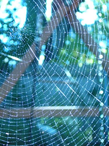 spider_web_5.jpg | by ramfublio