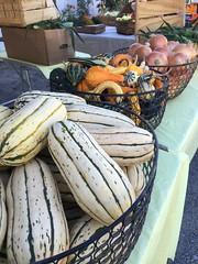Squash, gourds, onions