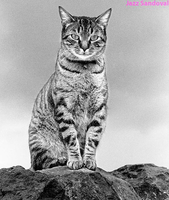 ¿Quién le puso el casacabel al gato? Famara, febrero 1986.