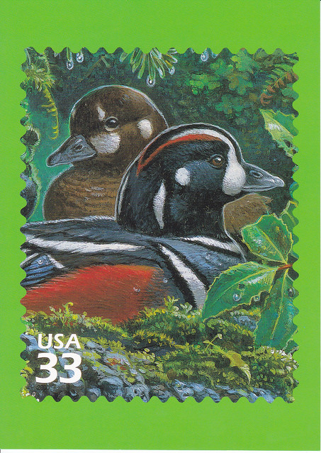 USPS Pacific Coast Rain Forest Harlequin Duck Postcard