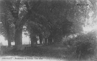 La promenade de l'Orme à Orgelet