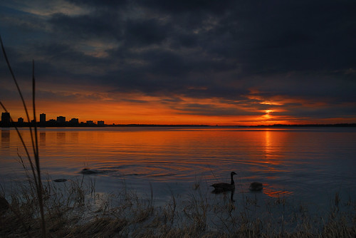 city sunset sky ontario canada colour reflection bird grass clouds river nikon ottawa goose shore 24mm28 d80