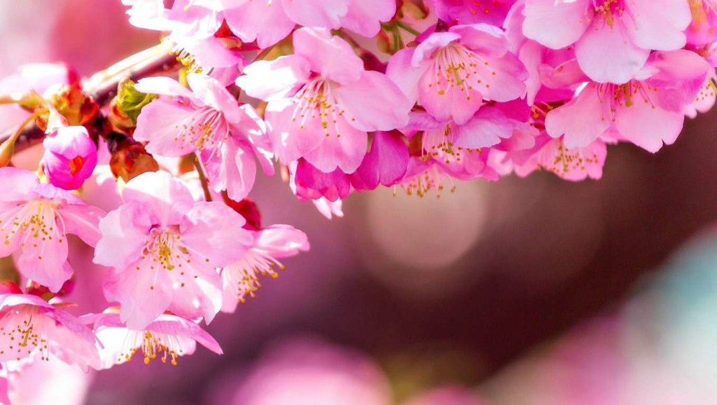 Flower Background Hd Www Beautiful Flowers Wallpaper Com