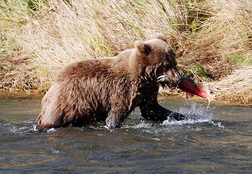 A Bear of a Lunch on Brooks | by t i g