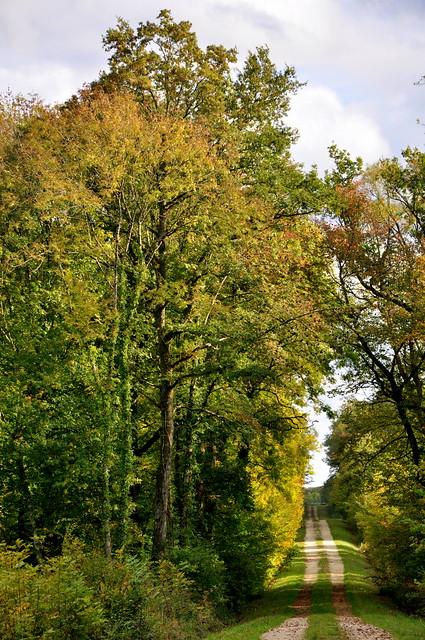 Chemin de la forêt du bois de la reine