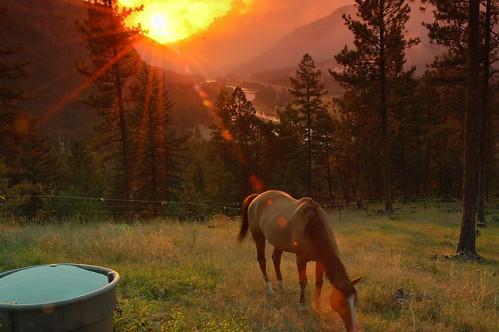 horse mountain animal rural landscape cheval fire montana country rockymountains equine wildfire quarterhorse nikond200 reddun