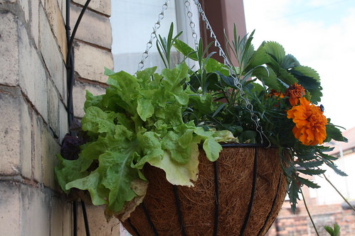 Baskets St Davids Road   by tenantspin
