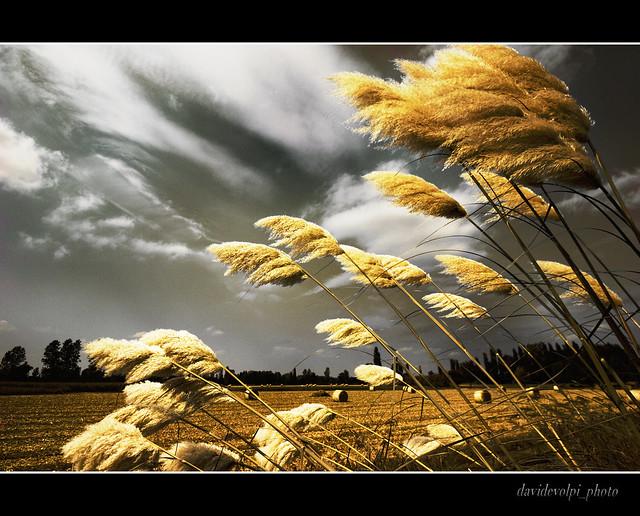 Paesaggi padani, un giorno di settembre - September's day