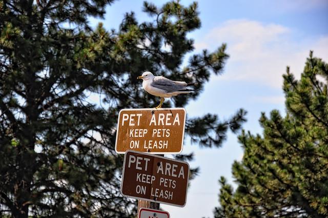 Sea Gull and a Pet Area