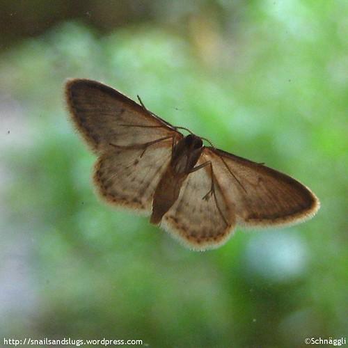 The Moth | by Schnäggli