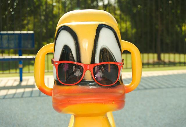 Stylish Duck