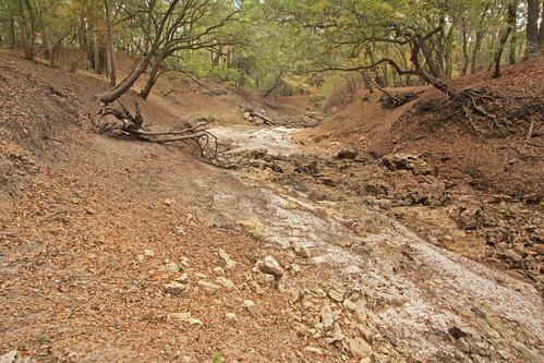 deadriver jenningsblufftract suwanneeriverwatermanagementdistrictlands