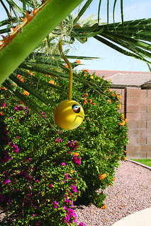 Birdpods House (Phoenix)