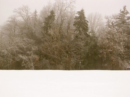 winter snow storm ice weather fog pennsylvania farmland icestorm icy lancastercounty icefog wintersunrise badweather winterstorm winterweather wintermorning coldmorning snowfog icecovered icecoveredtrees icecoveredbranches