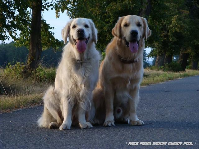 2009_08_22 - Ares a Bóňa ve Veltrusích