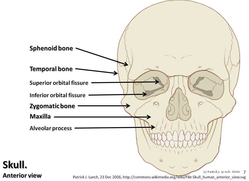 skull diagram, anterior view with labels part 2 axial sk\u2026 flickrpage skull diagram, anterior view with labels part 2 axial skeleton visual atlas, page