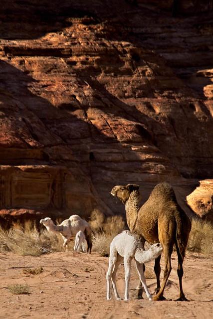Breakfast of champions (Wadi Rum, Jordan)