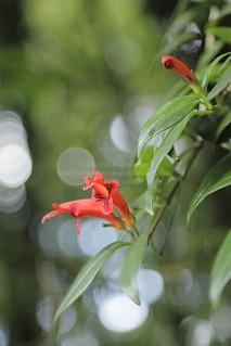 Doi Inthanon National Park, Chom Tong, Chiangmai, Thailand | by Nobythai