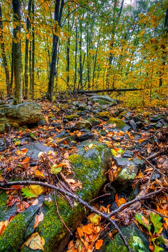 autumn color fall nature leaves forest canon landscape eos woods angle farm wide newengland newhampshire foliage robertfrost 5d markii