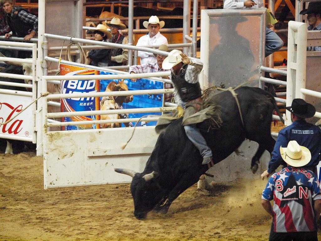 Pasadena Texas Day 2 Pbr Bullriding Pasadena Livestock