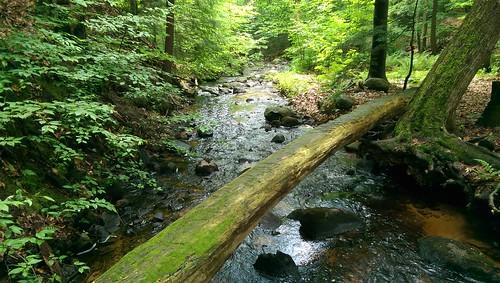 newyork stream upstateny naturalbridge brook clevelandnewyork