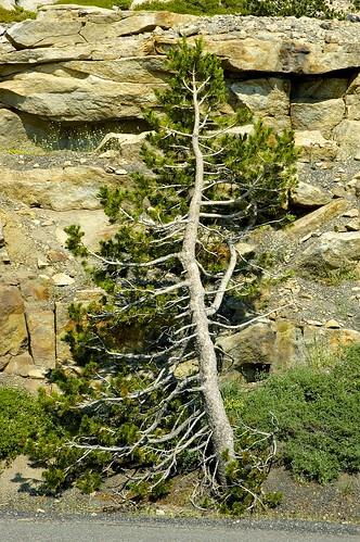 california trees usa mountains landscape nikon rocks outdoor nikond70s roadtripusa sierras dslr sierranevadamountains highway88 statehighway88